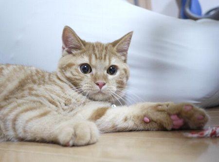 猫 飼い猫 赤ちゃん オーブン イタズラ 海外 動画 YouTubeに関連した画像-01