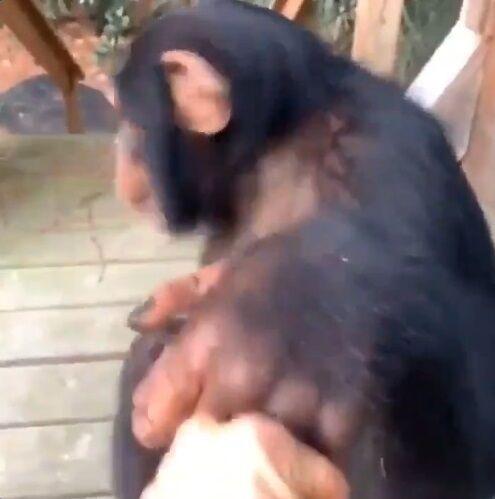 猿 人間 信頼関係に関連した画像-10