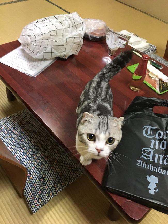 旅館 ネコ 猫 レンタル 泊まる まいきゃっと 湯河原に関連した画像-02