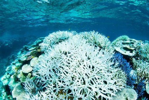 サンゴ 白化 防ぐ物質に関連した画像-01