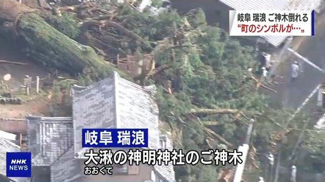 岐阜県 ご神木 倒壊 に関連した画像-05
