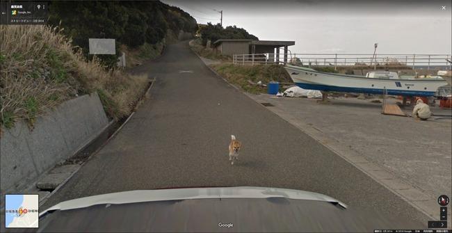 グーグル google ストリートビュー 犬 イッヌに関連した画像-04