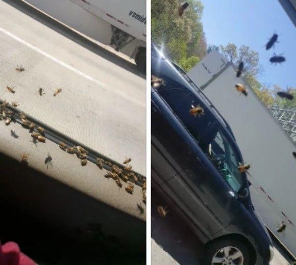 ミツバチ トラック 3000匹 脱走 運転に関連した画像-04