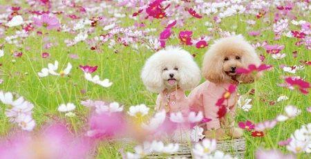 犬 インスタ 写真 ツイッター 炎上 花畑 立入禁止に関連した画像-01