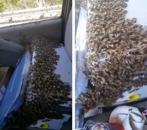 ミツバチ トラック 3000匹 脱走 運転に関連した画像-03