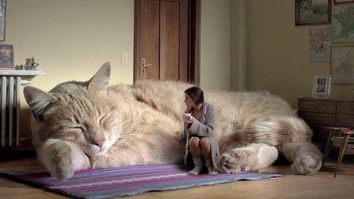 ネコ 巨大化 ビッグマックに関連した画像-01