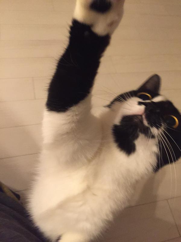 猫 ハム頂戴に関連した画像-04