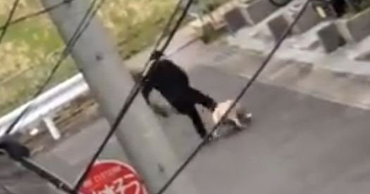 犬 動物 虐待 蹴り 散歩に関連した画像-01