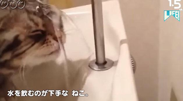 NHK ムロツヨシ 猫 LIFE コント 癒し動画に関連した画像-15