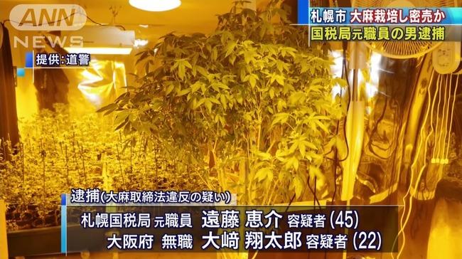 元国税職員 大麻密売 栽培に関連した画像-04