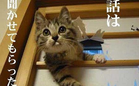 猫 モニター セリフに関連した画像-01