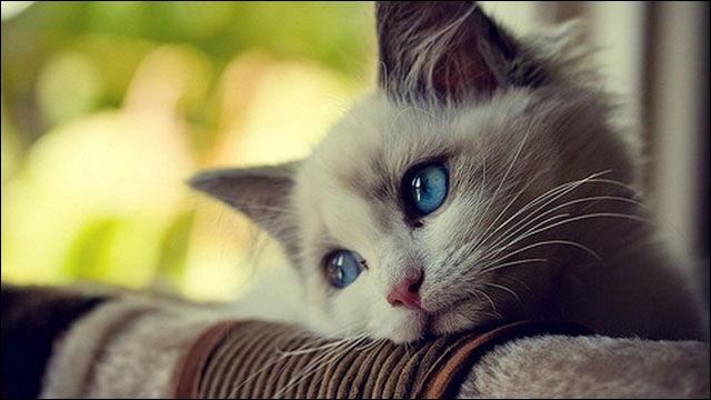 宇都宮動物園 捨て猫 保健所に関連した画像-01