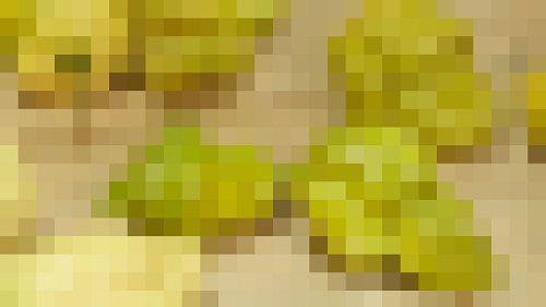 唐辛子 ペッパーX に関連した画像-01