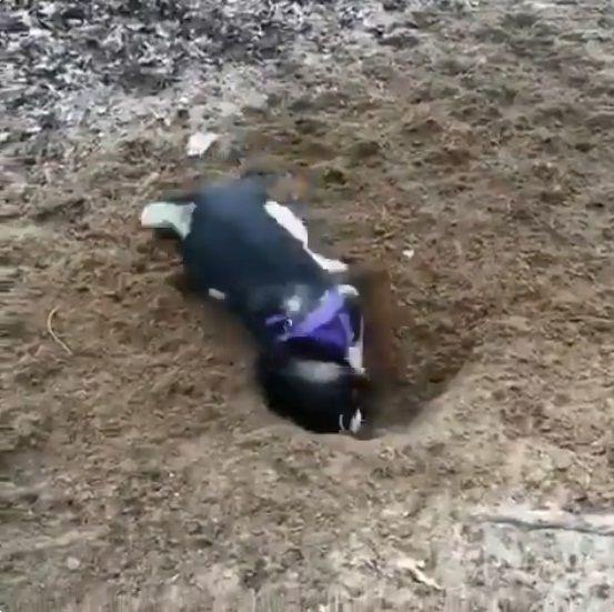 犬 穴掘り テンションに関連した画像-02