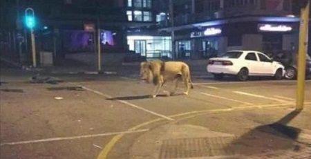ツイッター デマ 逮捕 熊本地震 ライオン 動物園に関連した画像-01