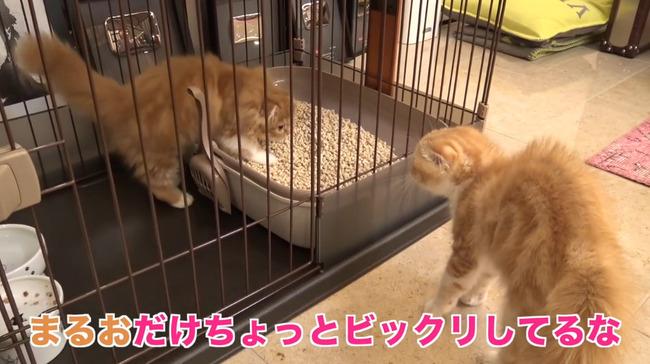 ヒカキン 猫に関連した画像-09