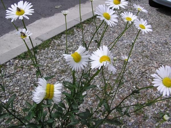 福島 花 帯化 放射能 ツイッター 奇形に関連した画像-04