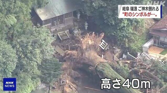 岐阜県 ご神木 倒壊 に関連した画像-04