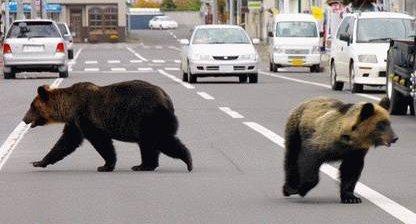 北海道 熊 獣害 猟師 報償費 議会 否決に関連した画像-01