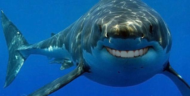夢診断 サメ 夢 無慈悲 冷酷に関連した画像-01