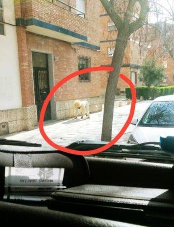 新型コロナウイルス 外出 禁止 外国人 犬 真似に関連した画像-02