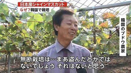 シャインマスカット 種苗法 韓国 農家 品種 売上 パクりに関連した画像-01
