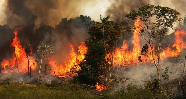 アマゾン 炎上 に関連した画像-01