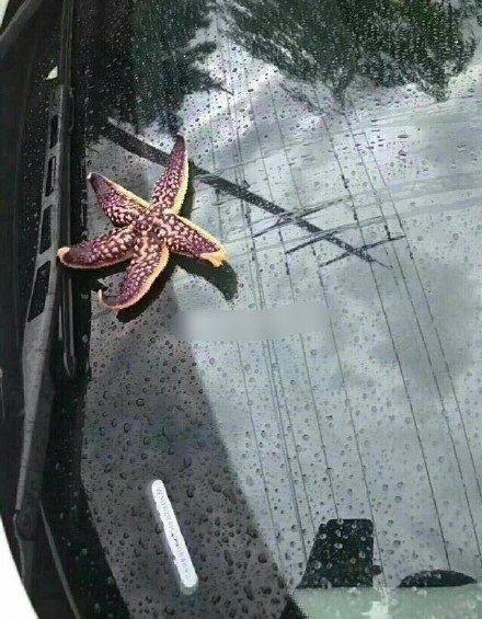 中国 豪雨 規格外に関連した画像-03