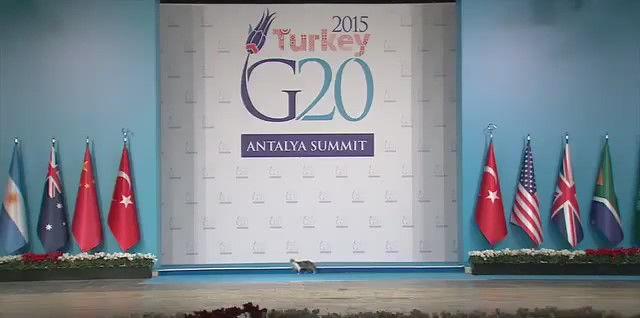 G20 侵入者 猫に関連した画像-04