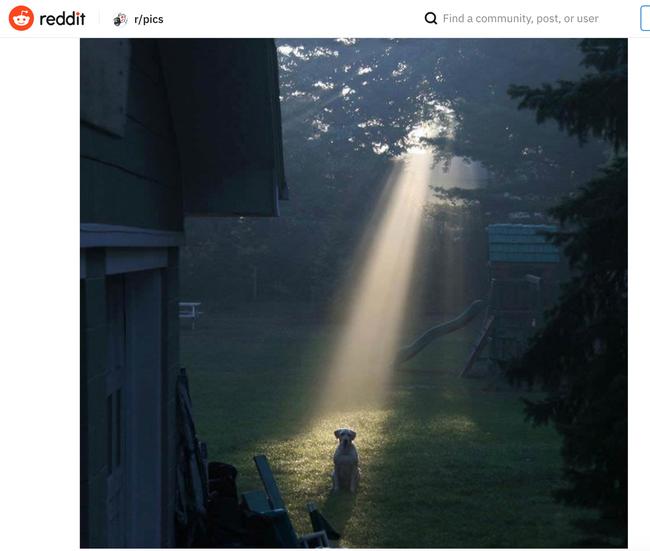ゼルダの伝説 マスターソード 犬に関連した画像-03