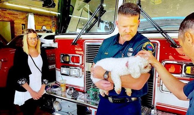 犬 人工呼吸 消防士に関連した画像-06