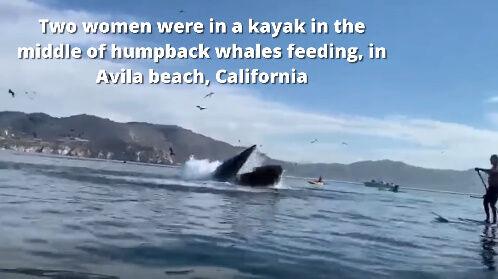 クジラ ホエールウォッチングに関連した画像-03