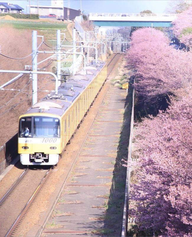 カメラマン 桜 電車 写真 奇跡の一枚に関連した画像-03