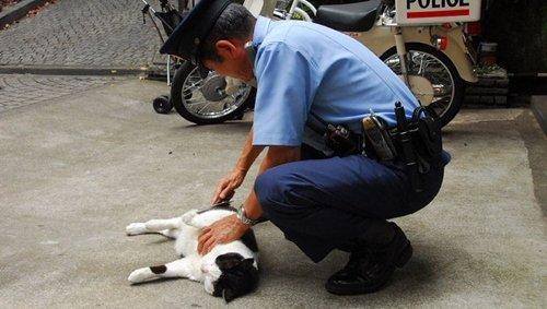 """【動画】札幌で強盗犯と警察官のガチ追跡劇が偶然撮影される→どっちもヘロヘロですごく""""ゆるい""""と話題に"""