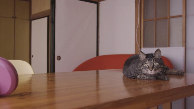 猫 かるかん 声 病気に関連した画像-15