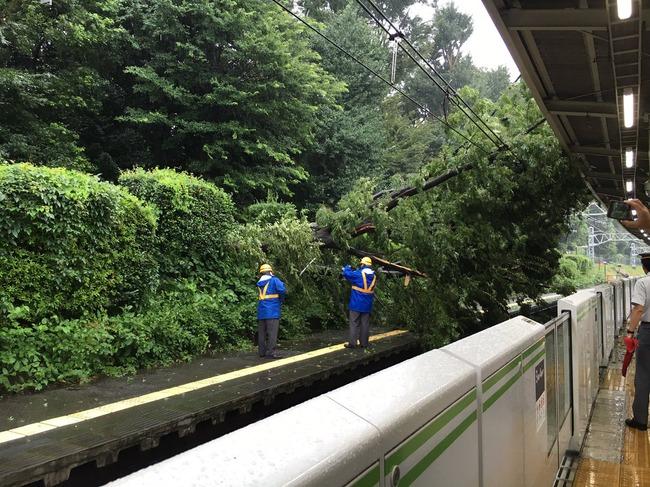 原宿駅 倒木 駅 木 山手線 台風に関連した画像-05