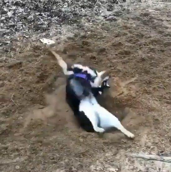 犬 穴掘り テンションに関連した画像-08