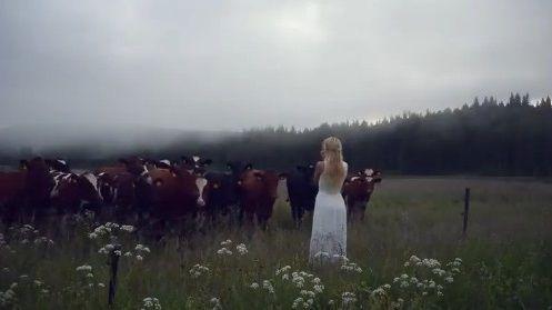 キュールニング 牛 交尾に関連した画像-05