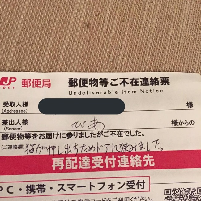 猫 郵便物 郵便受けに関連した画像-03