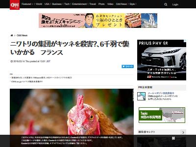 ニワトリ キツネ 殺害に関連した画像-02