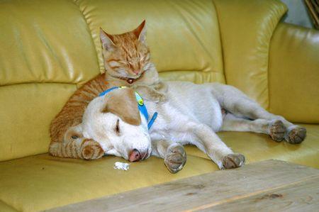 スペイン 犬と猫に人権に関連した画像-01