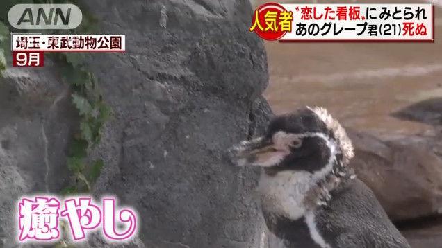 けものフレンズ けもフレ 東武動物公園 グレープ フルルに関連した画像-07