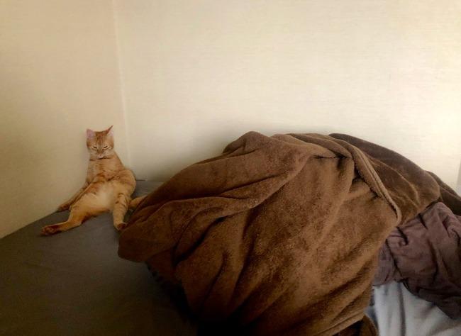やさぐれ 猫 に関連した画像-03
