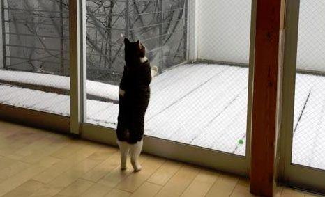 猫 雪に関連した画像-01