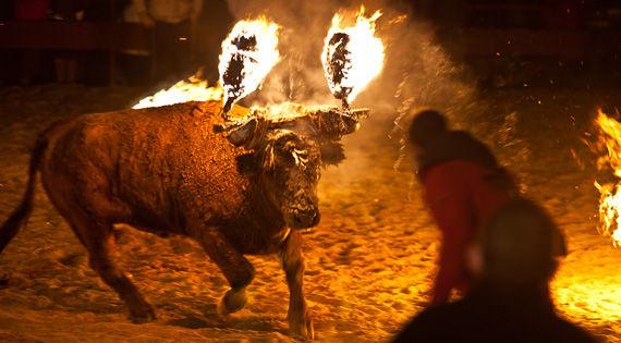 スペイン 牛 松明に関連した画像-01