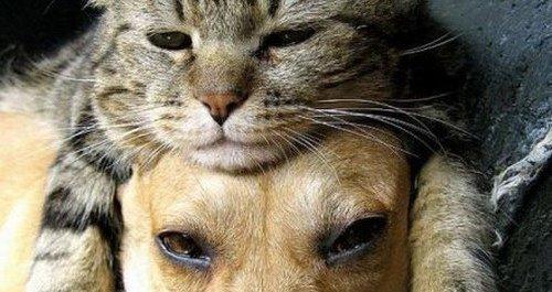 犬種 猫種 ペット 人気 ランキングに関連した画像-01