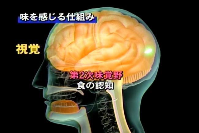 男性脳 女性脳 色覚 味覚 問題 判別に関連した画像-01