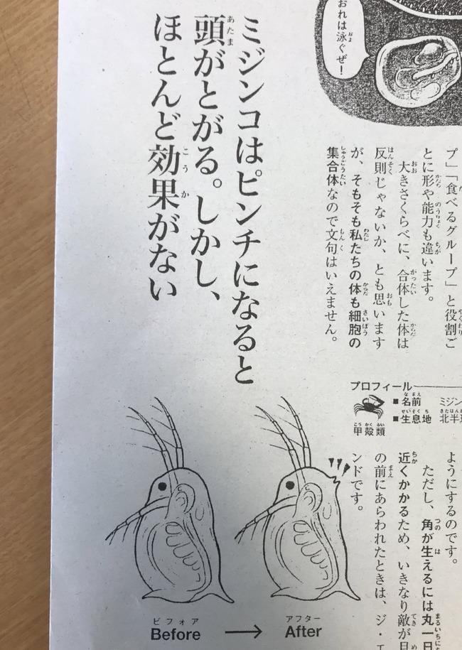 ミジンコ 秘技 とんがる に関連した画像-03