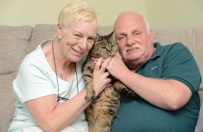 猫 ネコ 最長寿 脳卒中に関連した画像-04