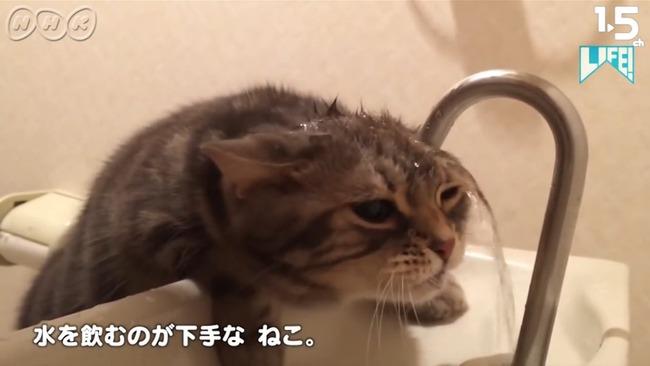 NHK ムロツヨシ 猫 LIFE コント 癒し動画に関連した画像-02
